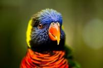 birdpark-1-19