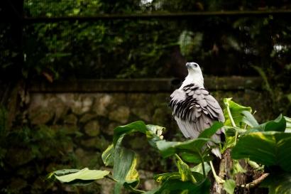 birdpark-1-28